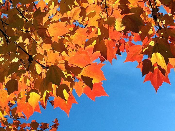 Fall in Leb II Web