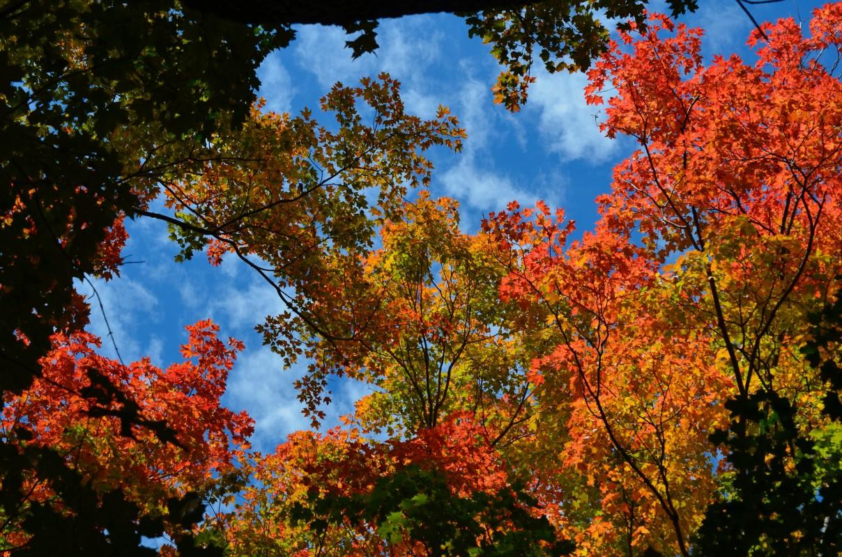 Foliage Fall 2015