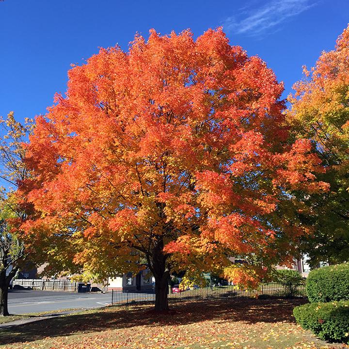 a-nice-tree